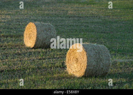 Circular hay bales on a farm in Eastern Oregon. - Stock Photo