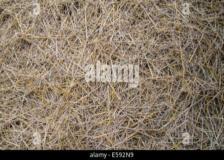 Zoom shot straw for background. - Stock Photo