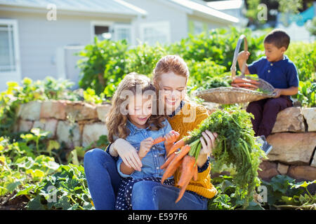Student and teacher picking carrots in field - Stock Photo