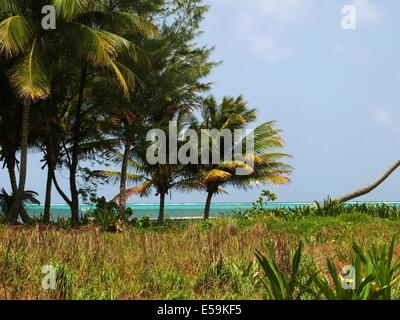 Vacant beach lot on Ambergris Caye, Belize - Stock Photo