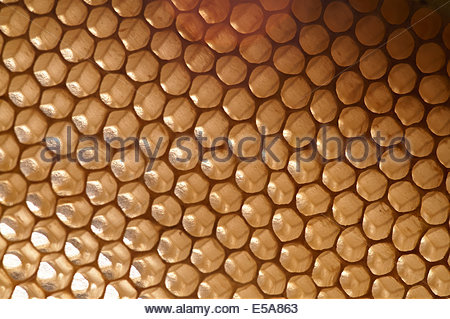 Sunlight shines through - backlit golden light - empty honeycomb. The bee's amazing construction skill evident in - Stock Photo