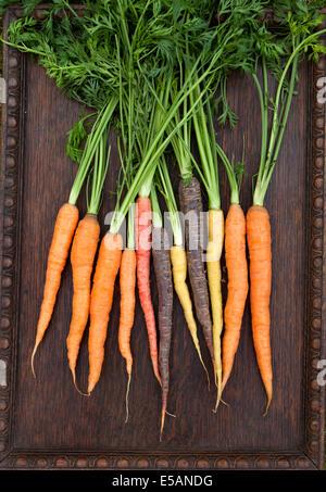 Organic Heritage Carrots - Stock Photo