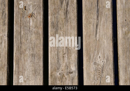 Dried old weathered wooden boards as background - Stock Photo