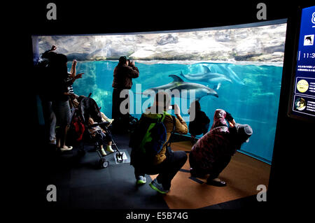 Dolphins, sea animals swimming in water tank. People, tourists, visitors taking pictures at Osaka Aquarium, Japan, - Stock Photo