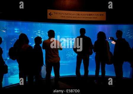 Whale shark, sharks, fish, stingrays, sea animals swimming in water. People, tourists, visitors, Osaka Aquarium, - Stock Photo