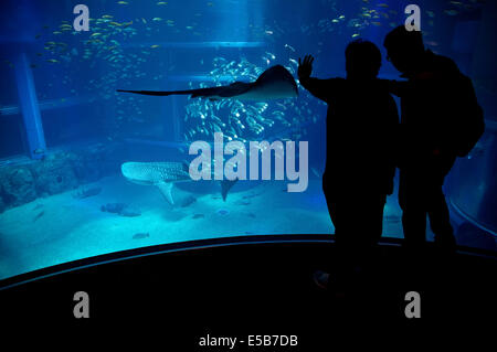 Whale shark, sharks, fish, stingray, sea animals swimming in water tank. People, tourists, visitors, Osaka Aquarium, - Stock Photo