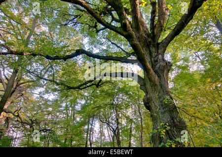Old foliage tree in forest - Stock Photo