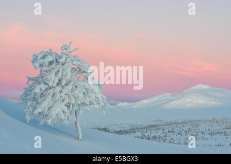 Frozen tree on winter landscape during sunrise - Stock Photo