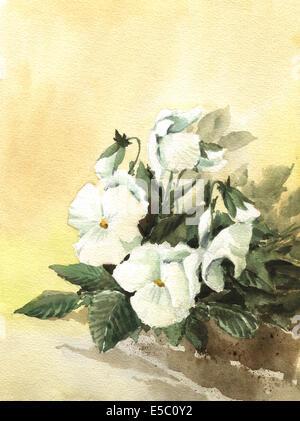 Painting of beautiful white pansy - Stock Photo