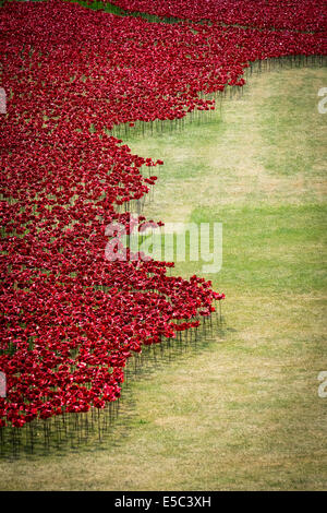 26th July 2014:  Ceramic Poppies planted in the dry moat at the Tower of London as part of a stunning major artistic - Stock Photo