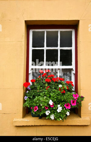 Close up colorful vintage windowbox garden with summer geranium and petunia flowers in Ireland, Europe - Stock Photo