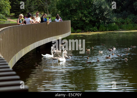 People feeding the swans and ducks from the Sackler Crossing Kew Gardens, Surrey England UK - Stock Photo