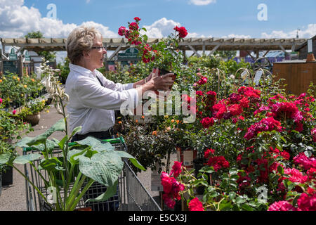Personable Senior Woman With Shopping Trolley Buying Fish In Marks  Spencers  With Glamorous  Older Woman Oap Looking At Roses And Plants In Local Garden Centre On  Summer Day Uk With Lovely Garden Plant Containers Also Versailles Garden In Addition Where Is My Nearest Garden Centre And Fire Garden Suite As Well As Garden Fence Gate Additionally Thai Garden Rothwell Kettering From Alamycom With   Glamorous Senior Woman With Shopping Trolley Buying Fish In Marks  Spencers  With Lovely  Older Woman Oap Looking At Roses And Plants In Local Garden Centre On  Summer Day Uk And Personable Garden Plant Containers Also Versailles Garden In Addition Where Is My Nearest Garden Centre From Alamycom