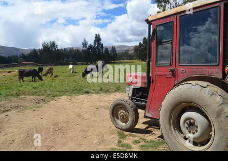 An old tractor on a field of dairy cows near Huancayo, in the Peruvian central Andes. - Stock Photo