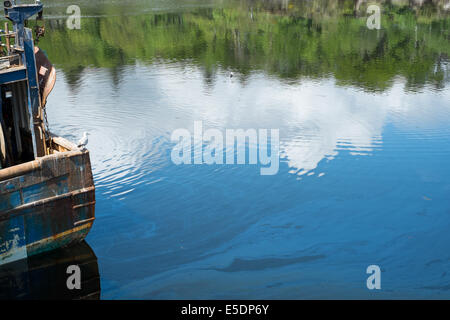 Seagull on a fishing boat with reflection of bright blue sky and white clouds in the water, Stornoway, Outer Hebrides - Stock Photo
