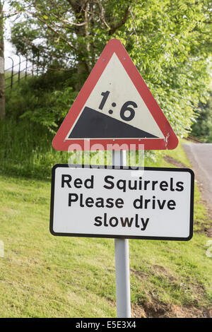 Sign warning of presence of red squirrels in the Lake District National Park, Cumbria, UK - Stock Photo