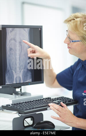Pets at Home Trafford store, vet looking at a digital x-ray on a computer screen - Stock Photo