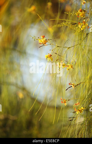 Flowers and the morning light @ Cairo - Stock Photo