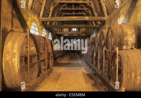 France, Normandie, Calvados, pays d'auge, le breuil en auge, chai de vieillissement du Calvados, tonneaux, barriques, - Stock Photo