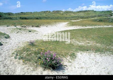 France, Bretagne, finistere sud, pays bigouden, pointe de la torche, sable, dunes, - Stock Photo