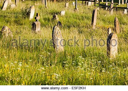 Overgrown graveyard - Stock Photo