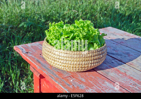 fresh lettuce leaves in wicker basket on wooden old red table in garden - Stock Photo