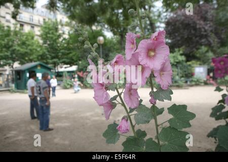 France, ile de france, paris, 17e arrondissement, square des batignolles, roses tremieres,  Date : 2011-2012