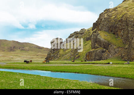 Yaks (Bos mutus) and Mongolian horses grazing in a valley on the Ongiyn river, near Arvaikheel, Southern Steppe - Stock Photo