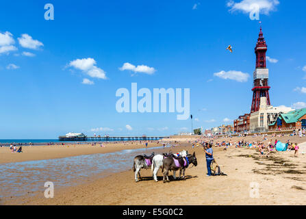 Donkey rides on the beach looking towards North Pier and Blackpool Tower, The Golden Mile, Blackpool, Lancashire, UK Stock Photo