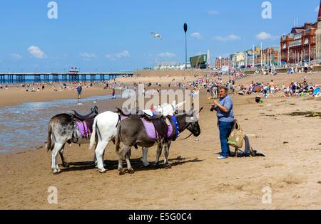 Donkey rides on the beach looking towards North Pier, The Golden Mile, Blackpool, Lancashire, UK - Stock Photo