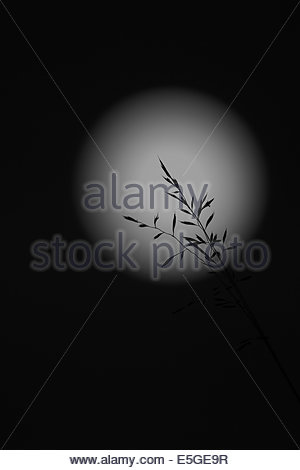 Grass silhouette and full moon - Stock Photo
