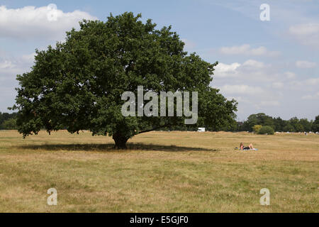 Wimbledon London, UK. 31st July 2014. Weather:   A woman sunbathes by a tree on Wimbledon common on the last day - Stock Photo