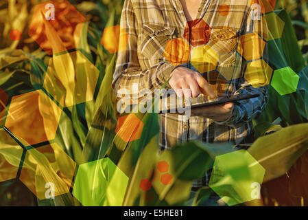 GMO science in corn field. female agronomist using tablet computer and software for genetic engineering in agriculture. - Stock Photo
