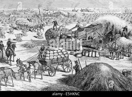 USA. Dakota. Steam-snorting engines power threshing machines harvesting the wheat crop in Dakota territory during - Stock Photo