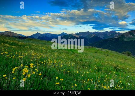 View of San Juan mountains and wildflowers from above U.S. Basin, near Silverton, Colorado USA - Stock Photo