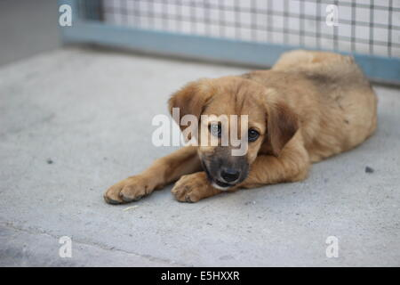 Puppy - Old Manali - Stock Photo
