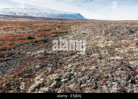 Snowy Arctic Tundra Landscape Stock Photo 4357851 Alamy