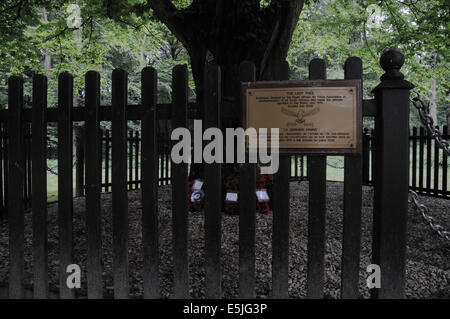 The Last Tree in Delville Wood, South African National Memorial and Museum - Stock Photo