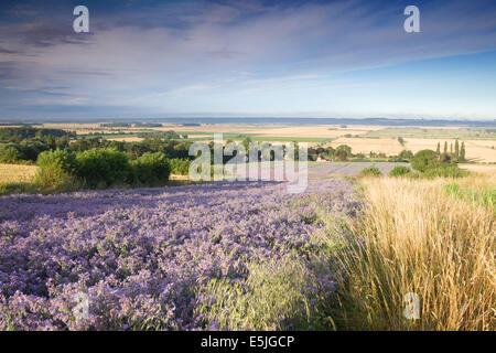 The countryside of North Lincolnshire near the village of Bonby, with the Ancholme Valley in the distance. August, - Stock Photo