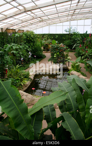 Inside the greenhouse Butterfly Park, Benalmadena, Costa del Sol, Spain. - Stock Photo