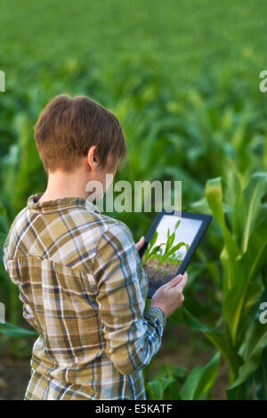 Female agronomist with tablet computer in agricultural cultivated corn field. - Stock Photo