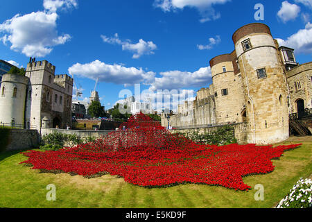 London, UK. 3rd August 2014. A sea of red ceramic poppies fill the moat of the Tower of London to commemorate the - Stock Photo