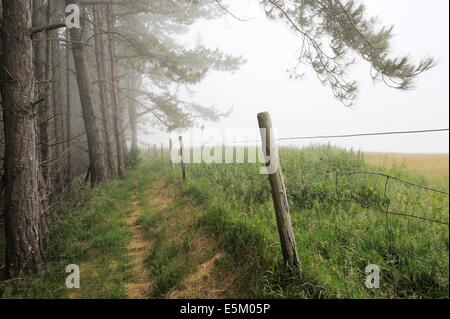 Public footpath running along the edge of a Pine plantation alongside agricultural fields in mist, Wales, UK - Stock Photo