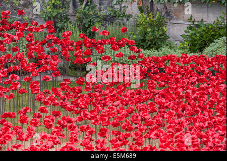 The Tower of London, UK. 4th August 2014. To commemorate the loss of British military fatalities in World War 1, - Stock Photo