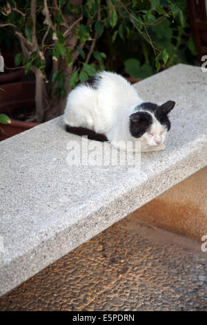 Cat Resting on Stone Bench - Stock Photo