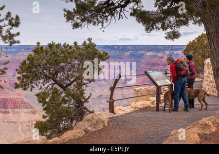 Couple  with dogs looking at information Board at Hopi Point, Grand Canyon, Arizona, USA. - Stock Photo