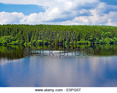 forest of conifer trees reflected in the water at Taf Fechan Pontsticill Reservoir Dolygaer Lake Brecon beacons national park