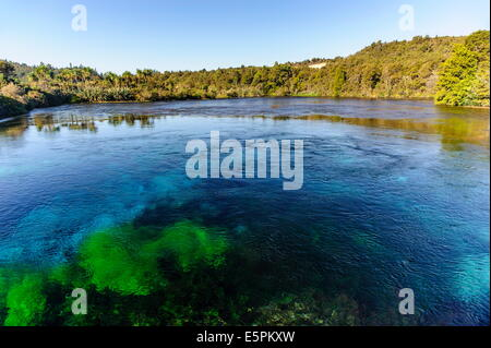 Te Waikoropupu springs, the clearest fresh water springs in the world, Takaka, Golden Bay, Tasman, South Island, - Stock Photo