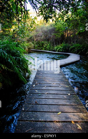 Te Waikoropupu springs, the clearest fresh water springs in the world, Takaka, Golden Bay, South Island, New Zealand - Stock Photo
