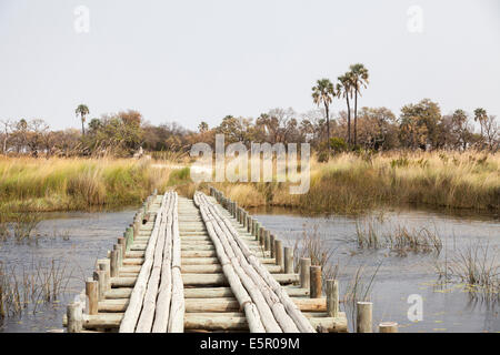 Precarious looking wooden bridge as a track for safari vehicles over a swampy river in the Okavango Delta, Botswana - Stock Photo